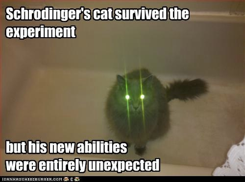 funny-pictures-cat-survived-experiment