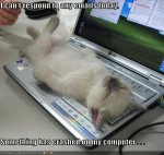 funny-pictures-kitten-crashed-laptop