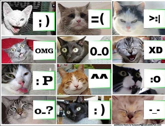kitteh-emoticons.jpg