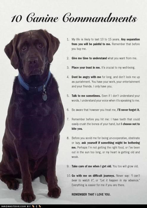 funny-dog-pictures-ten-canine-commandments