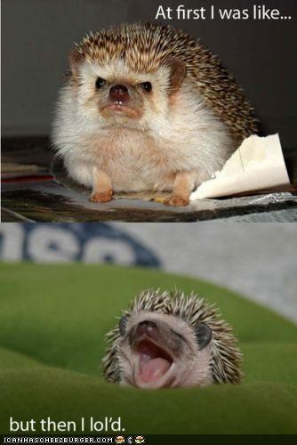 funny-pictures-hedgehog-loled
