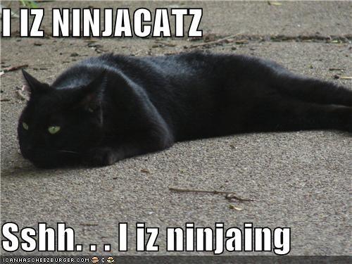 funny-pictures-i-iz-ninjacatz
