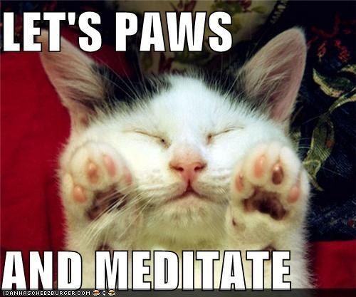 funny-pictures-lets-paws-and-meditate.jpg