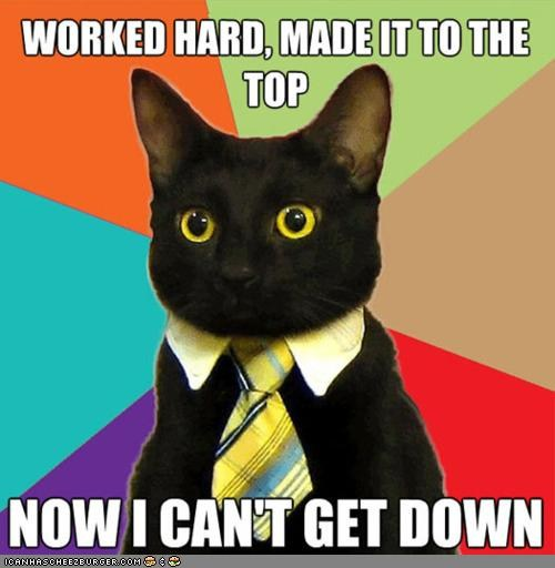 funny-pictures-meme-cats-business-cat-climb