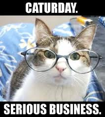caturday-serious-business.jpeg