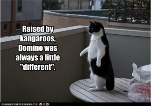 raised-by-kangaroos-300x211